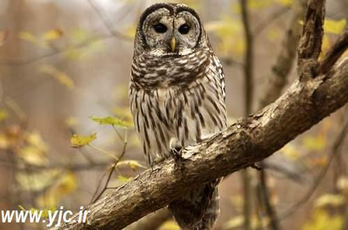 image, گزارش تصویری از پرنده های خشن و خطرناک دنیا