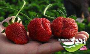 image آشنایی با خواص کامل میوه توت فرنگی