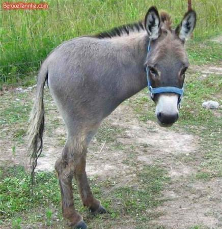 image عکس های بامزه از حیوانات عجیب غریب فتوشاپی
