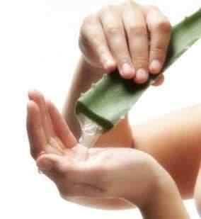 image آموزش استفاده از آلوئه ورا به طور صحیح برای زیبایی پوست
