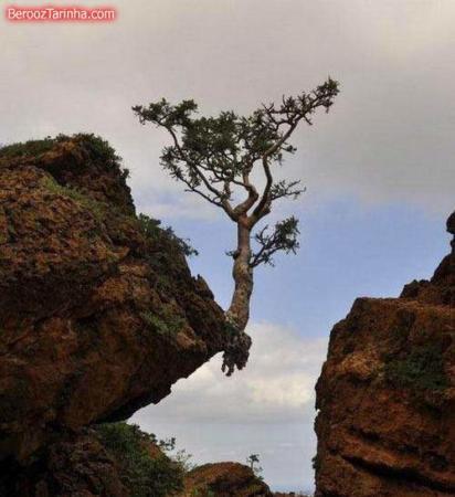image خداوند چطور زندگی درخت در جهان هستی را حفظ میکند