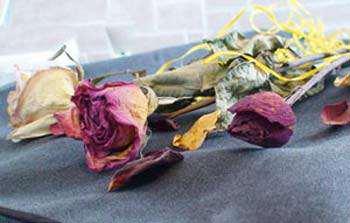 image آموزش جالب خشک کردن گل های تزیینی با ماکروویو