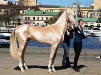 image تصاویر دیدنی زیباترین اسب در جهان هستی