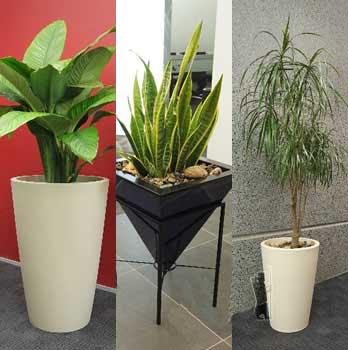 image چطور باید از گیاهان در خانه نگهداری کنیم