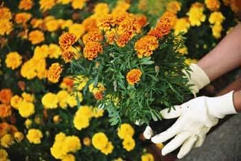 image توصیه های مهم برای آب دادن به گلدان های خانه و باغچه