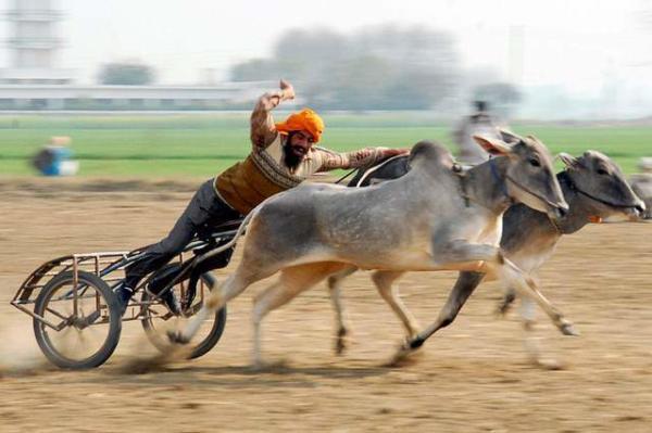 image مسابقات گاورانی در هند