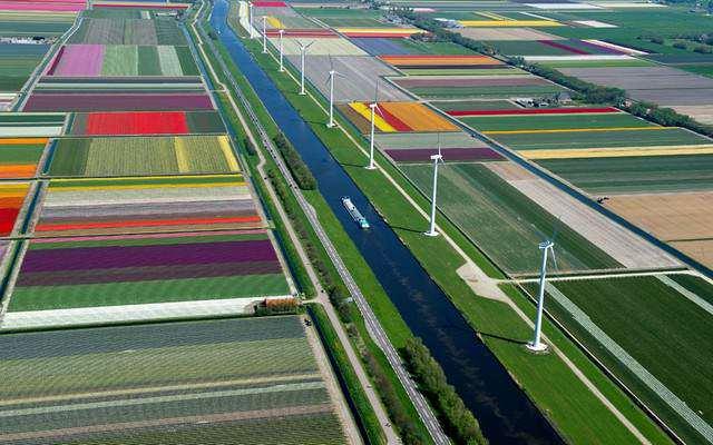 image زمین های گل لاله در هلند