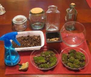 image آموزش ساخت تراریوم زیبا و جالب در خانه