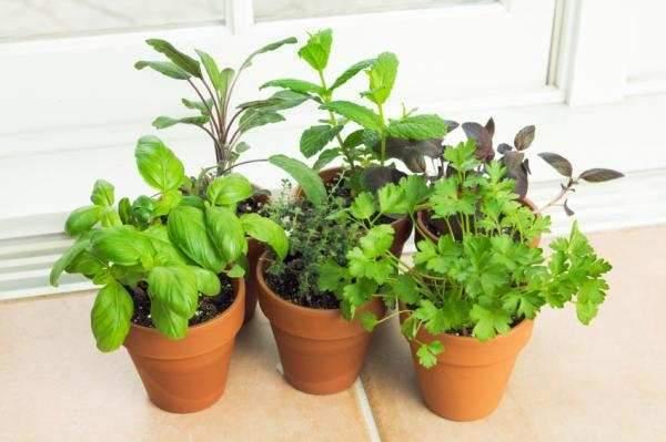 image آموزش کاشت انواع سبزیجات خوراکی در حیاط منزل یا در گلدان کوچک
