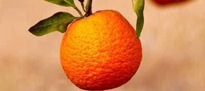 image ماسک شادابی میوه های زمستانی برای پوست صورت