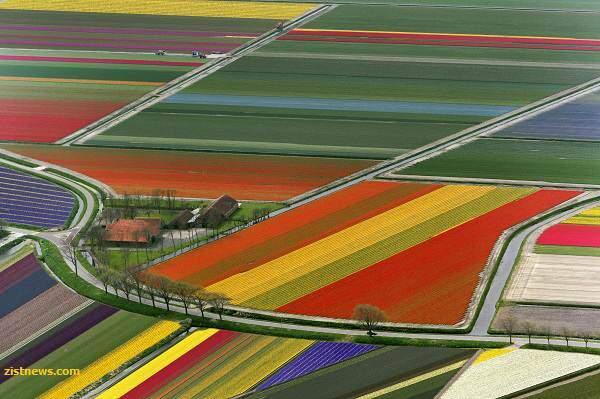 image گزارش تصویری هوایی از باغ های زیبای گل هلند