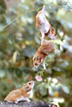 image عکس های دیدنی محبت آمیز حیوانات