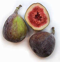 image بهترین میوه های مفید برای طوطی های ملنگو
