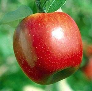 image بهترین اثرات مفید سیب ترش بر سلامتی
