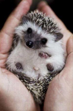 image عکس های بامزه از حیوانات کوچولو