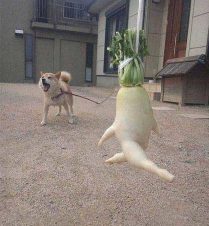 image عکس های خنده دار میوه های عجیب غریب