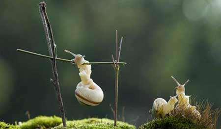 image عکس زیبای زندگی حلزون ها عکاس روسی