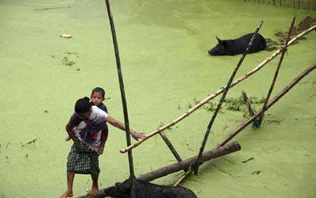 image استفاده از شاخه های بامبو به عنوان پل هند
