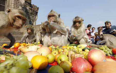 image جشن میهمانی سالانه میمون ها در تایلند