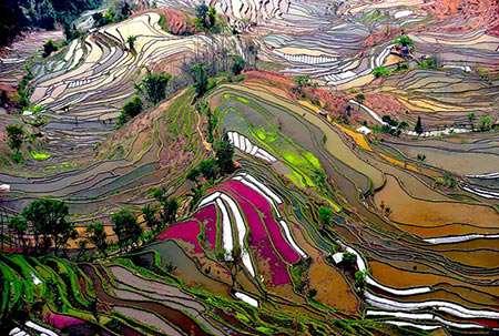 image مزارع جادویی برنج