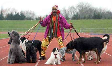 image عکس کلاس ورزشی برای سگ های چاق