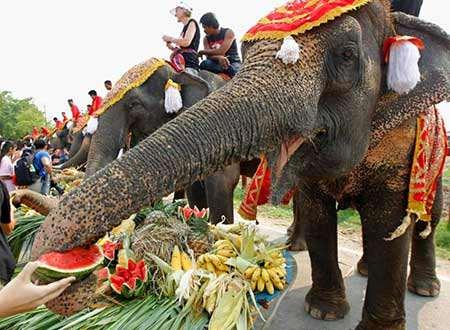 image روز ملی فیل در تایلند