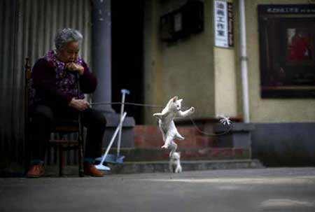 image, زنی چینی در حال بازی با بچه گربه اش
