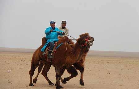 image مسابقه شترسواری در مغولستان داخلی