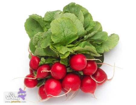 image, بهترین سبزی های فصل بهار کدامند