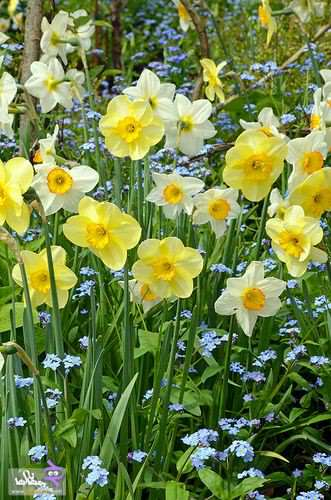 image, تصاویر دیدنی زیباترین گلهای فصل بهار