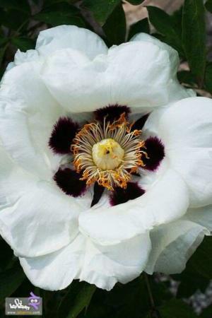عکس, تصاویر دیدنی زیباترین گلهای فصل بهار