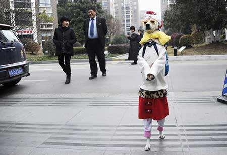 image, راه رفتن روی دو پا سگ خارق العاده شانگهای چین