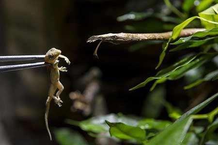 image, غذا دادن به مار در باغ وحش جمهوری چک