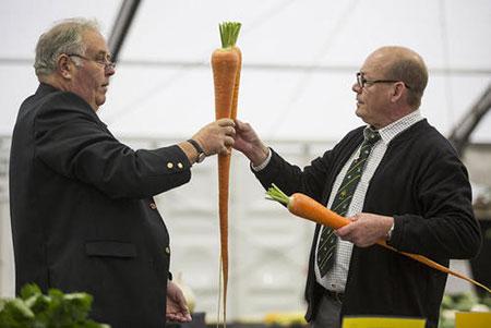 image, جشنواره عجیب ترین محصولات کشاورزان انگلستان