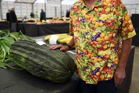 image جشنواره عجیب ترین محصولات کشاورزان انگلستان