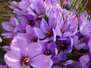 image, لیست کامل خواص زعفران برای سلامتی