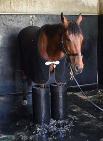 image, خنک کردن پاهای اسب مسابقات با ظرف یخ