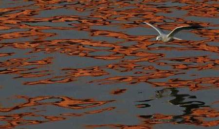 image عکس پرواز زیبای مرغ دریایی برای شکار ماهی