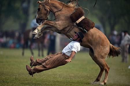 image زمین خوردن وحشتناک اسب سوار حرفه ای