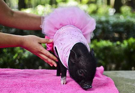 image, عکس بامزه جشن مخصوص حیوانات خانگی مکزیک