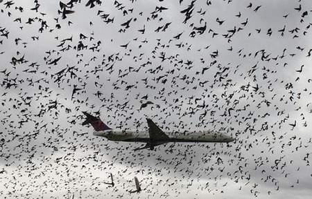 image, پرواز پرنده ها فرودگاه شهر واشنگتن هنگام فرود هواپیما