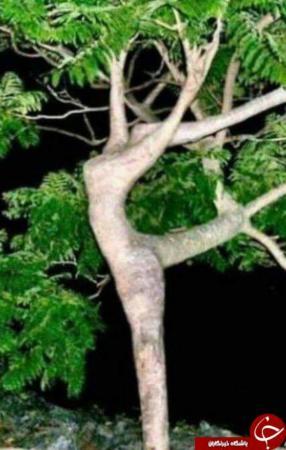 image عکس های دیدنی درخت های شبیه آدم ها