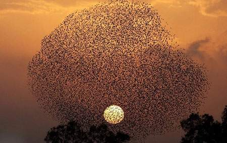 image عکس زیبای پرواز گروهی پرندگان در سیبری