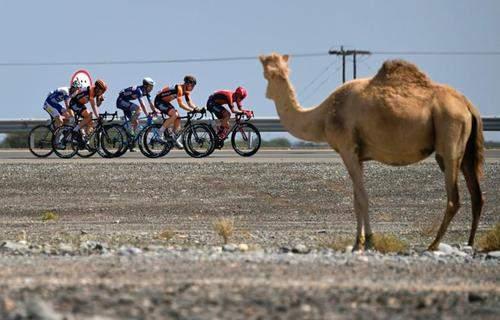 image, عکسی زیبا از تور بین المللی دوچرخه سواری دور قطر