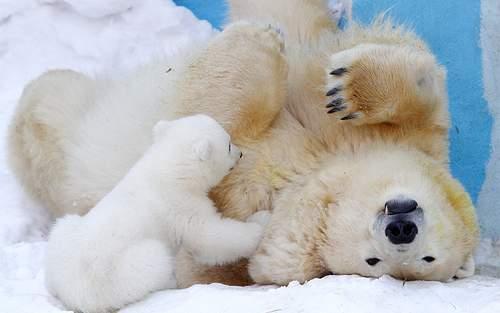 image, عکس های بامزه از میمونها سگ ها و خرس ها