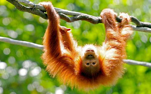 image عکس های بامزه از میمونها سگ ها و خرس ها