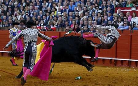 عکس, عکس زیبای گاو بازی در سویل اسپانیا