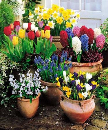 image, چطور حیاط های کوچک را در بهار با صفا کنیم