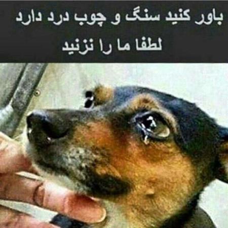 image عکسی تاثیرگذار برای جلوگیری از آزار سگ های بی گناه