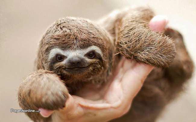 image, عکس های شگفت انگیز از لحظه خندیدن حیوانات